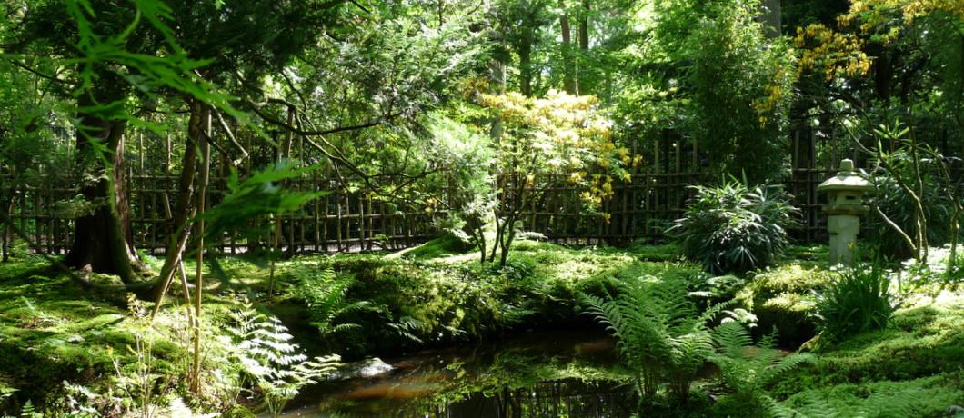 Vijver Japanse tuin Den Haag