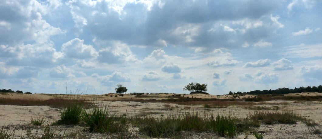 Alleen sterke planten overleven in de Loonse en Drunense Duinen stuifvlakte
