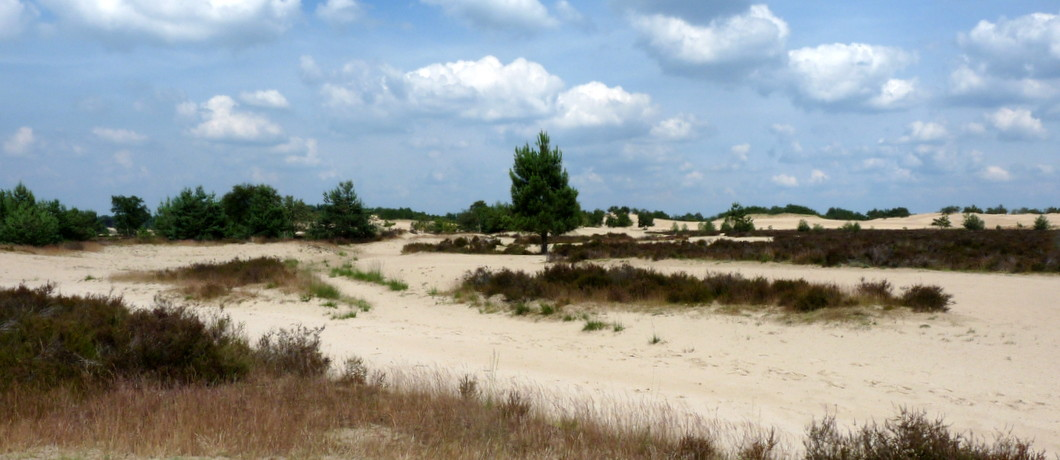 De stuifvlakte is onderdeel van de Loonse en Drunense Duinen