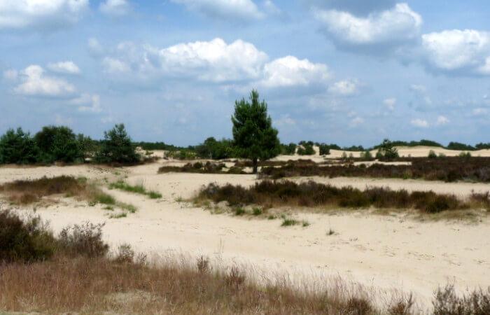 Stuifvlakte is onderdeel van de Loonse en Drunense Duinen