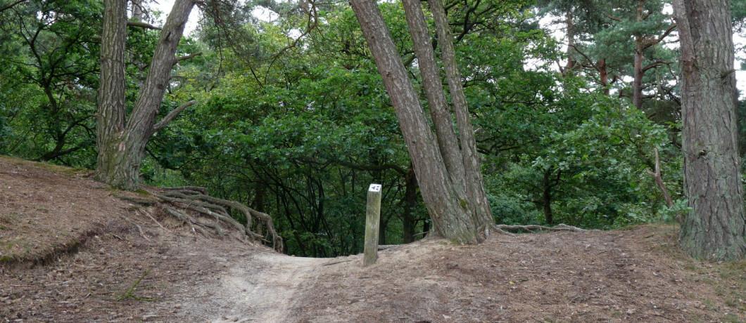 Mountainbiken in de Loonse en Drunense Duinen