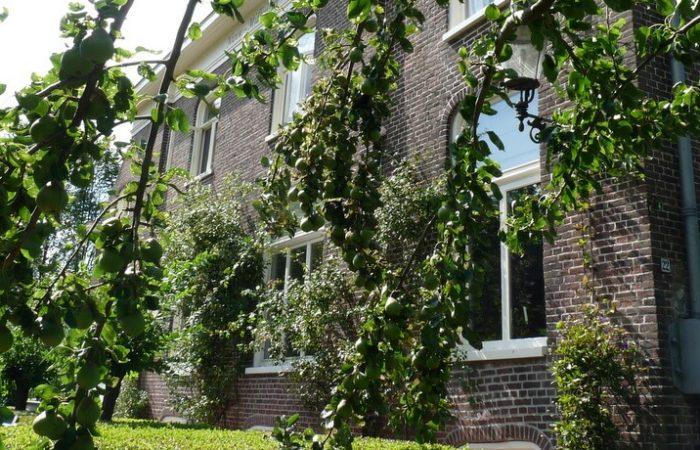Gevel met perenboom B&B Nieuw-Midhuizen