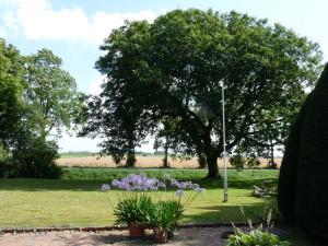 walnootboom B&B Nieuw-Midhuizen