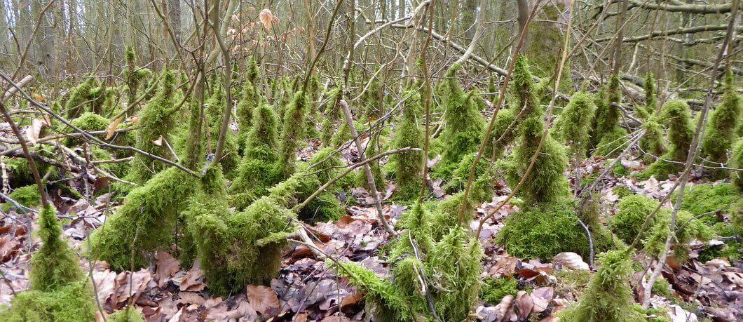 Mossen op Schokland