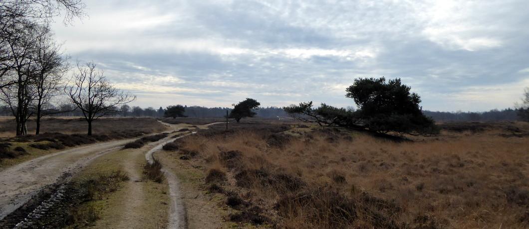 Heide in Nationaal Park Drentsche Aa
