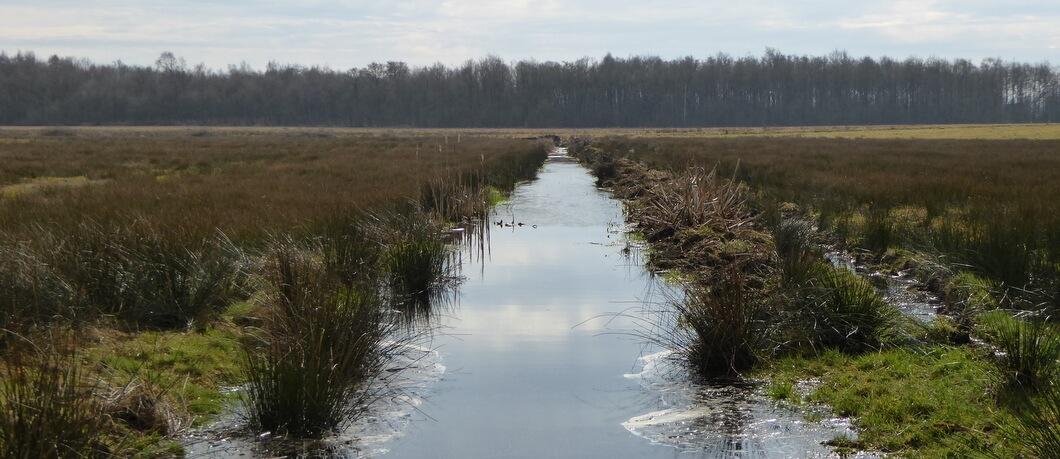Landschap van Nationaal Park Drentsche Aa