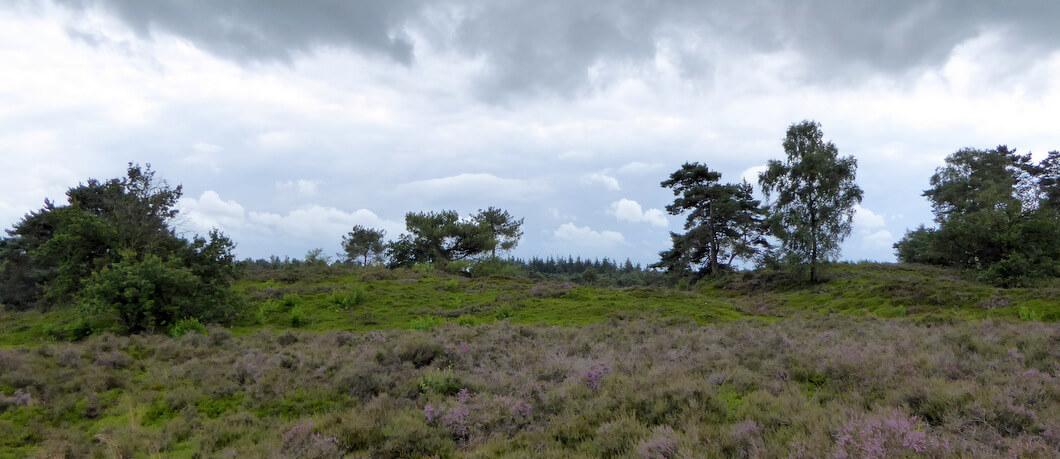 Heide bij de Tonnenberg