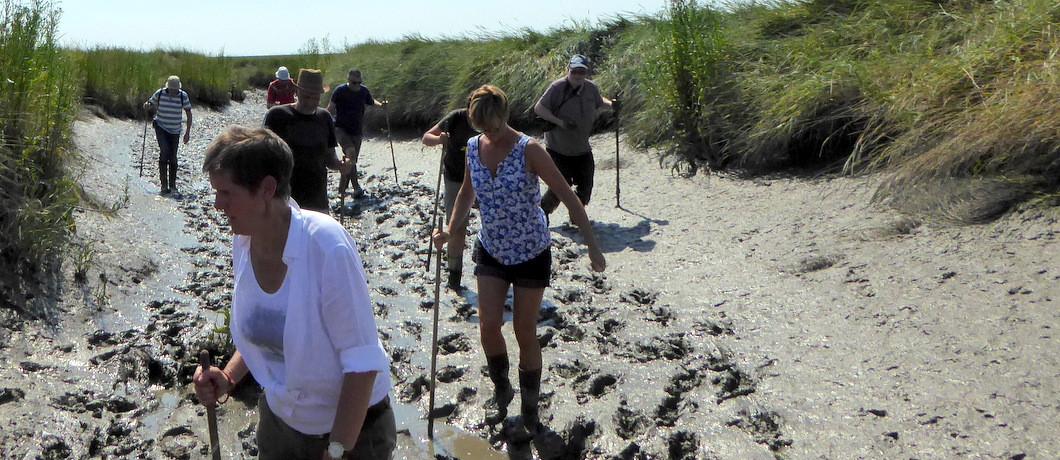 Wadlopen door de modder van Het Verdronken Land van Saeftinghe