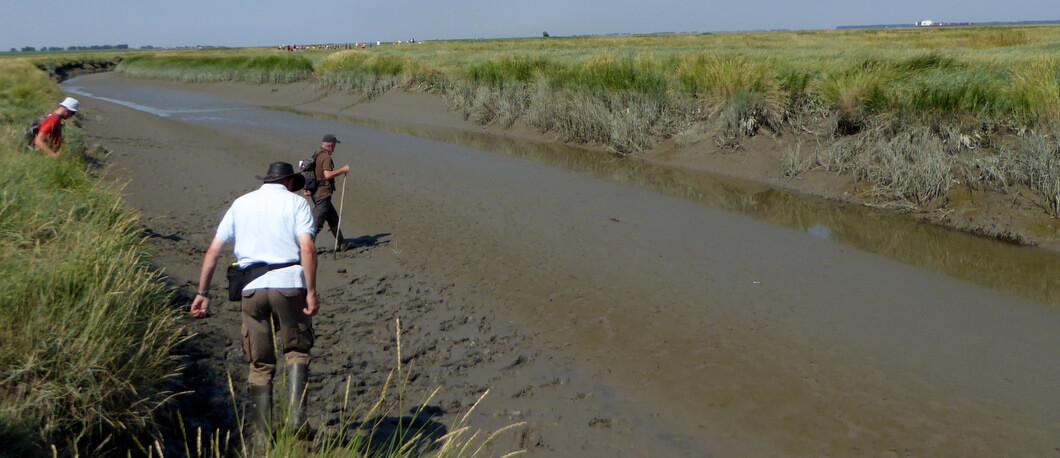 Excursie in Het Verdronken Land van Saeftinghe
