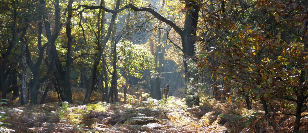 Bossen van Nationaal Park De Meinweg