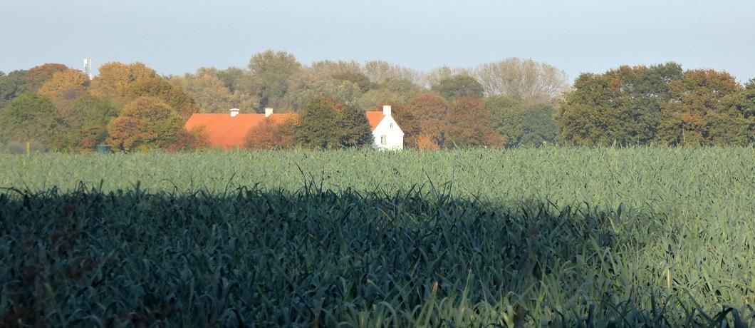 Wandelen langs velden en boerderijen in natuurgebied De Krang