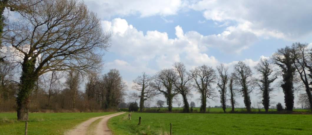 Velden afgewisseld met bomen (foto Davides)