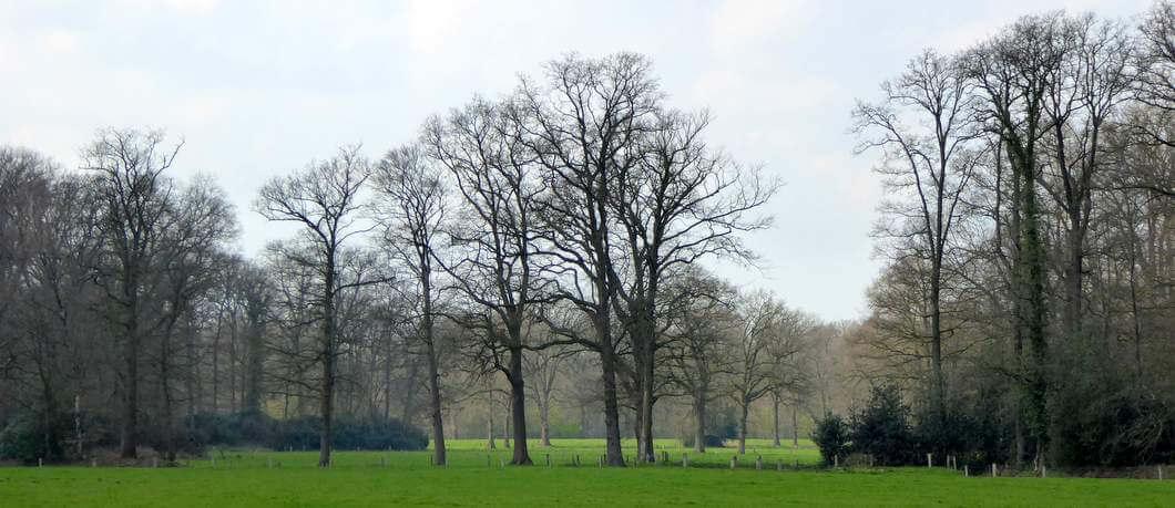 landschap-landgoed-twickel-davides
