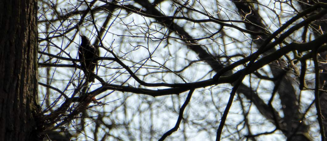 Vogel in de bomen op landgoed Twickel (foto Davides)