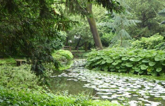 Vijver van tuin Schoonoord (Foto: Davides.nl)