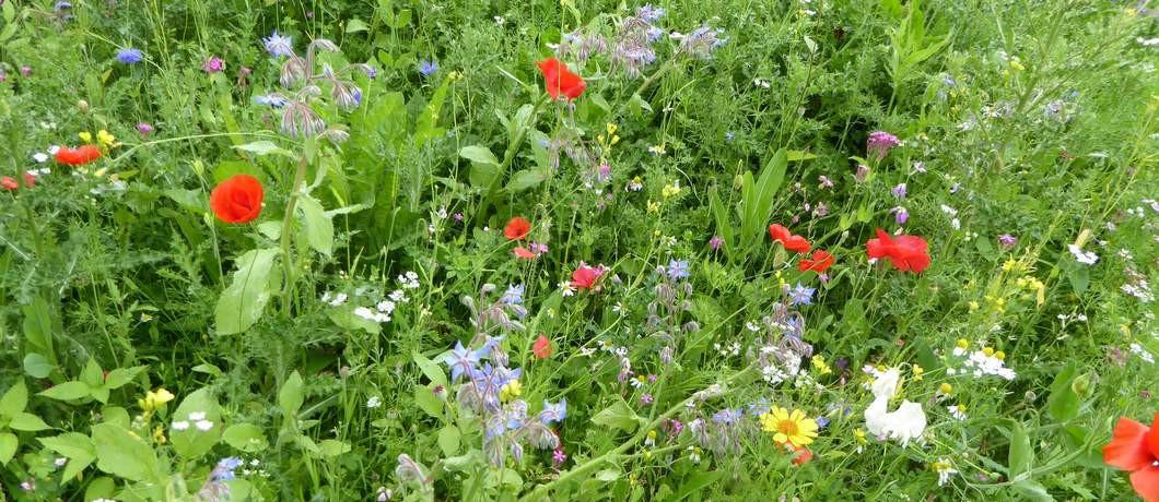 bloemen-wandelen-bemelen-davides
