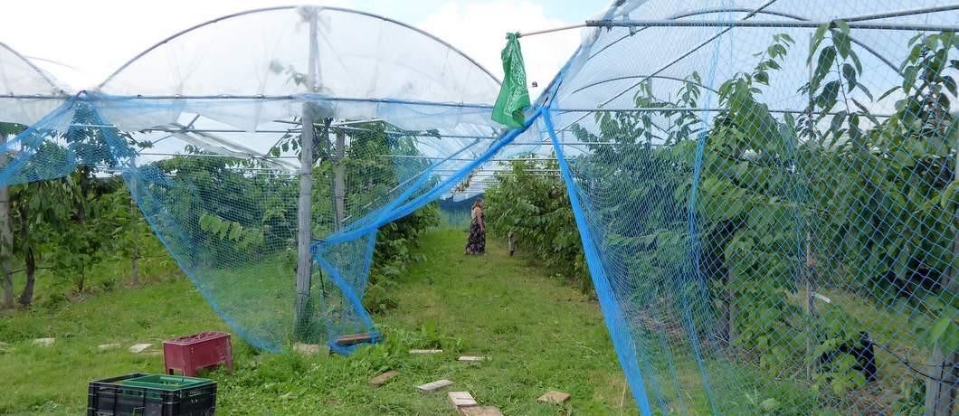 Boomgaard Fruittuin van West (Foto: Davides.nl)
