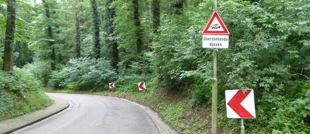 Dassen wandelen Geuldal (Foto: Davides.nl)