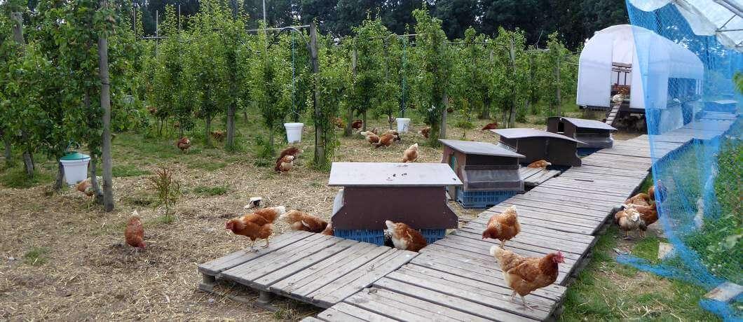Fruittuin van West: biologisch-dynamische pluktuin in Amsterdam - Reisblog Davides