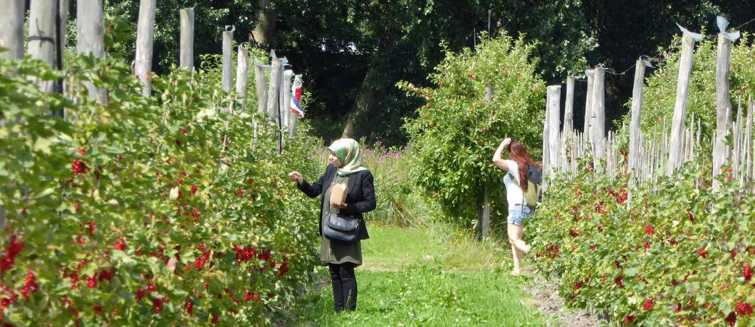 Pluktuin Fruittuin van West (Foto: Davides.nl)