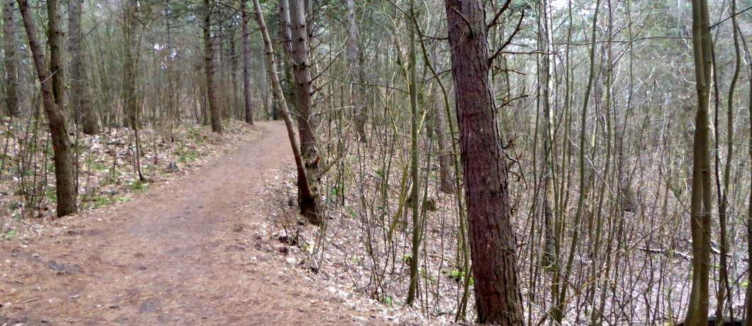 Bos bij de Wassenaarse slag