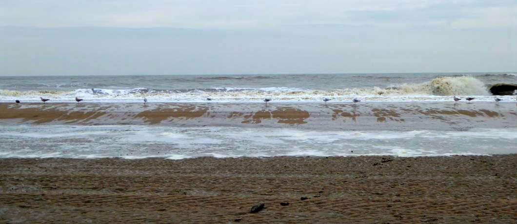 Meeuwen in de vloedlijn van het strand bij de Wassenaarseslag
