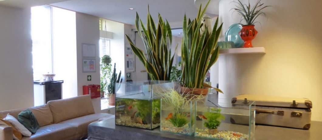 Huisvis Blub te huur in Townhouse Hotel Maastricht