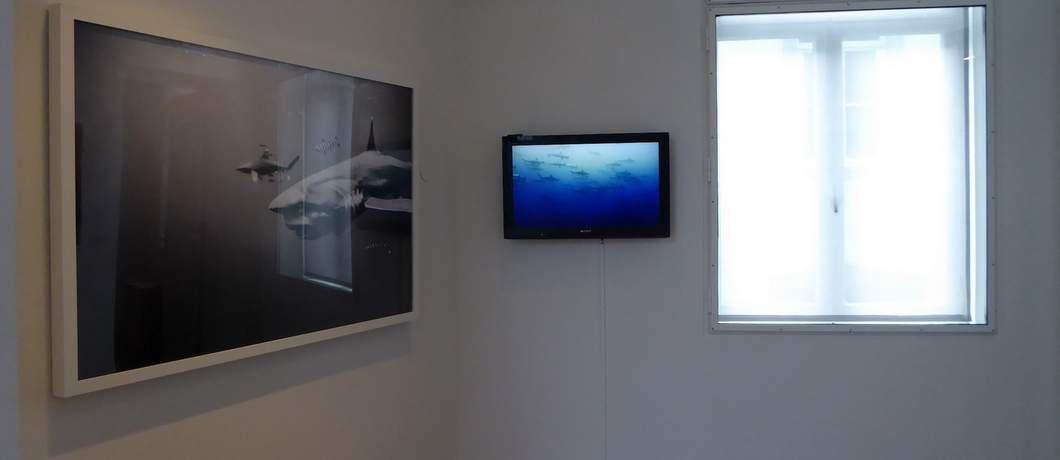 Haaien in de expositie van Taschen in Museum aan het Vrijthof