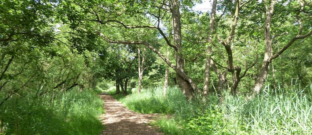 moerasbos-wandelen-ankeveense-plassen-davides