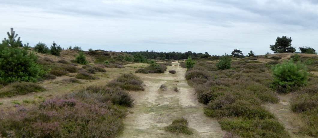 Wandelen over het Aekingerzand in het Drents-Friese Wold