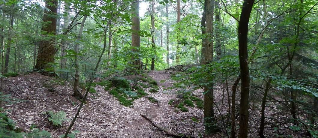De Boschberg Oud bos tijdens het wandelen in het Drents-Friese Wold