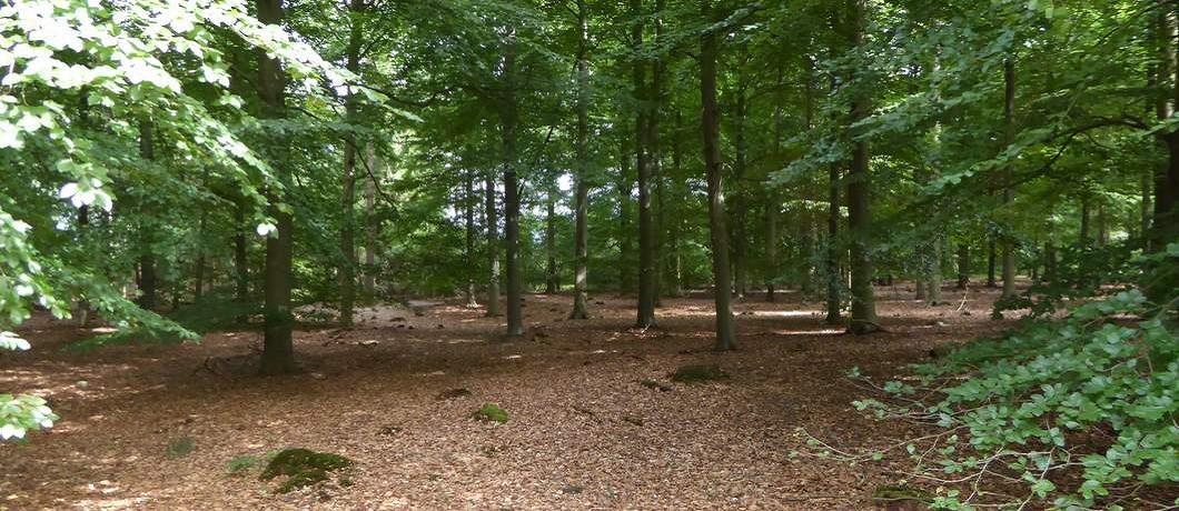 Jong bos onderweg bij de wandeling door het Drents-Friese Wold