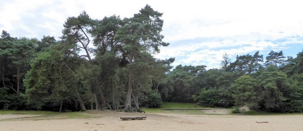 Open vlakte in het bos vlakbij Appelscha