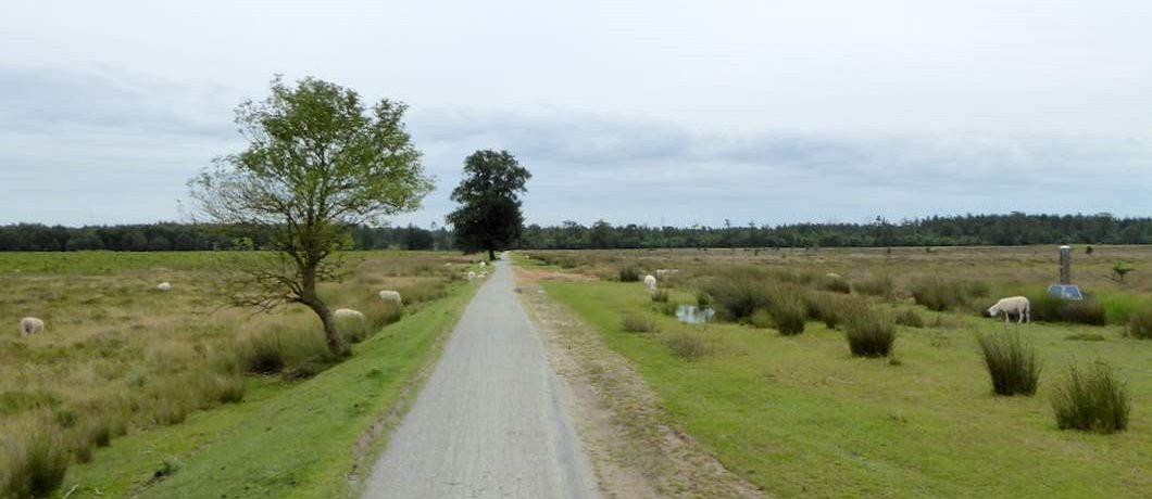 De vlakte van het Aekingerzand op de wandeling door het Drents-Friese Wold