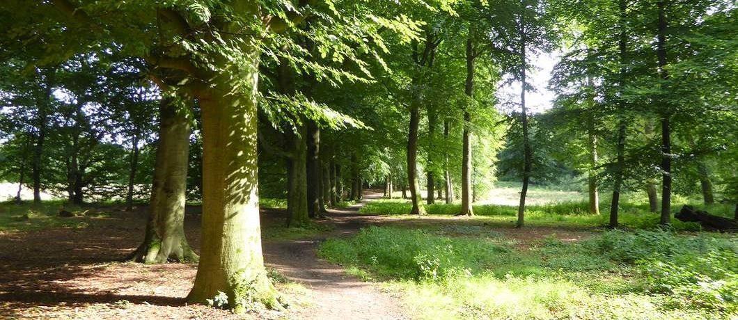 Kronkelende bomenlaan bij wandelen in het Gooi