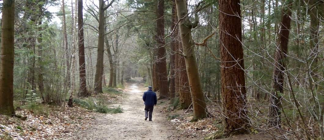 Bos wandelen rond Hattem