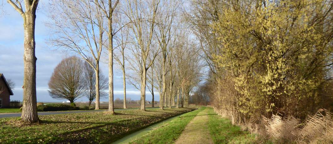 bosrand-wandelen-museumbospad-almere-davides