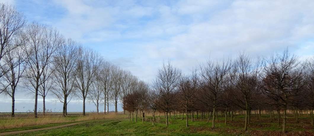 oerlabyrint-wandelen-museumbospad-almere-davides