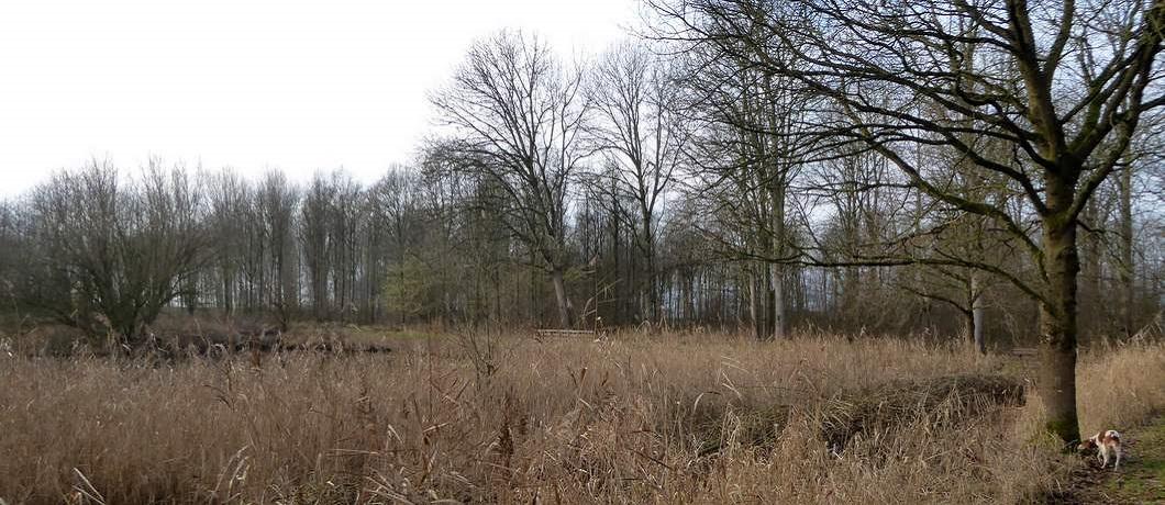 poel-wandelen-museumbospad-almere-davides