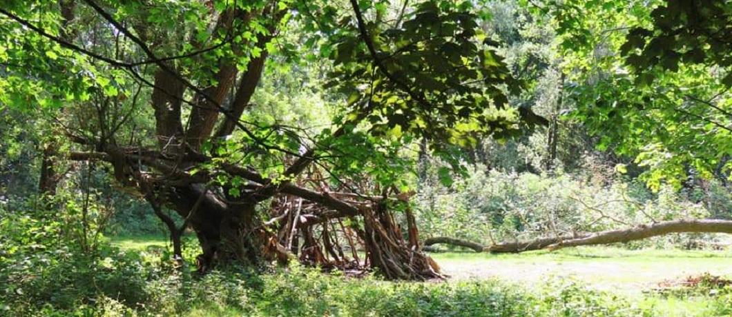 Bos op het Eiland van Brienenoord