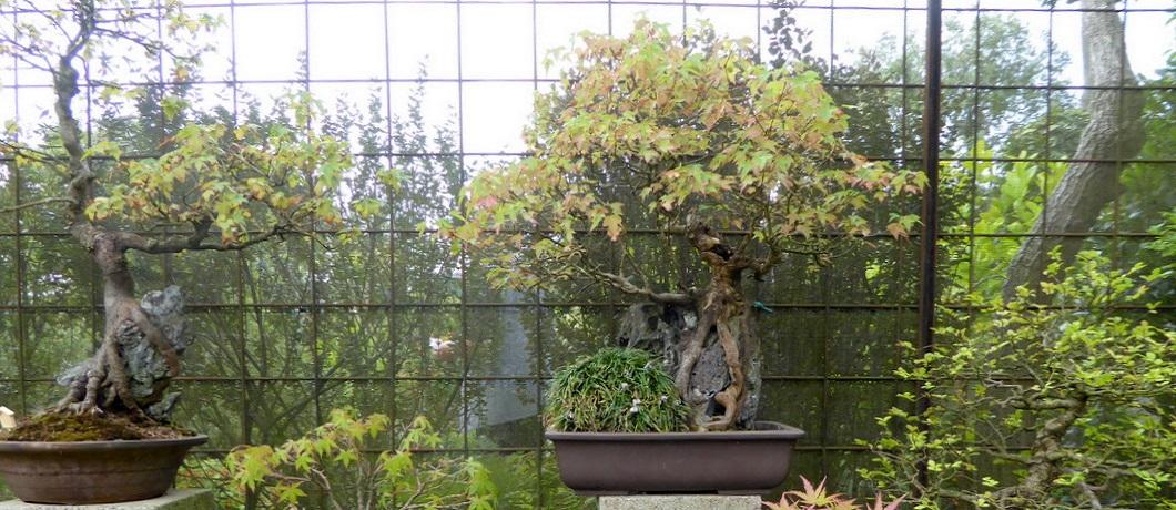 bonsai-botanische-tuin-zuidas-davides