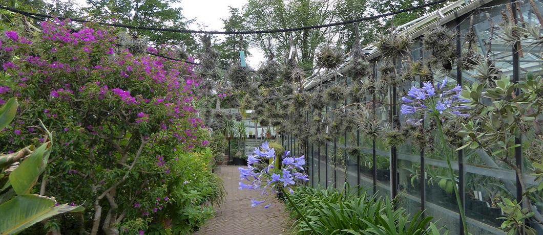 epifyten-bloemen-botanische-tuin-zuidas-davides