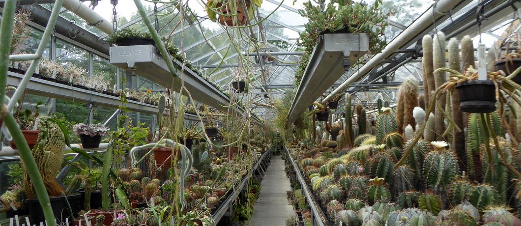 kas-cactussen-botanische-tuin-zuidas-davides