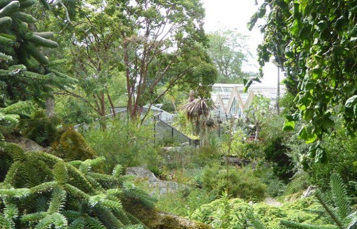 Doorkijkje naar de kassen van de Botanische tuin Zuidas in Amsterdam