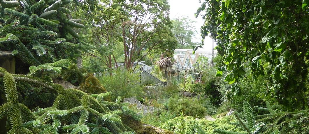 tropische-botanische-tuin-zuidas-davides