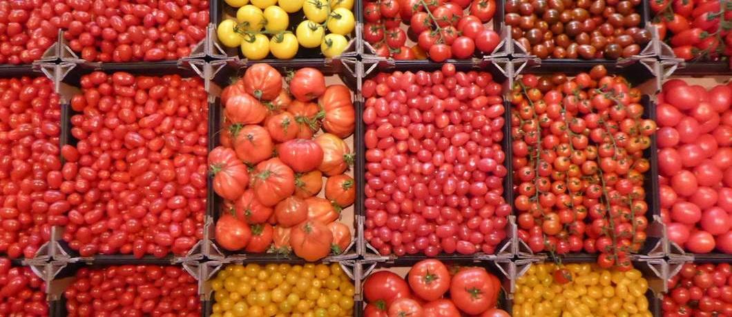 Tomaten bij Landwaart Culinair in Maartensdijk