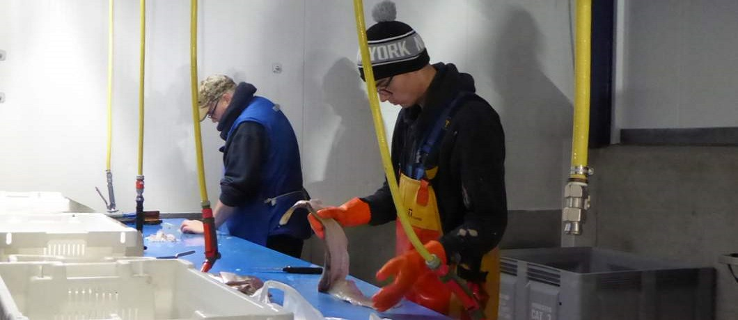schoonmaken-vis-zeeverse-vismarkt-wieringen-davides