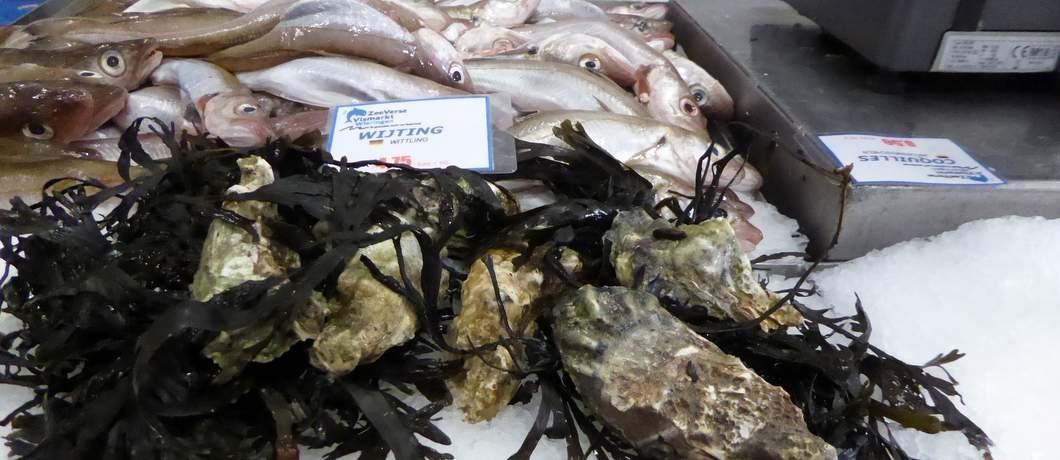 verkoop-bijvangst-zeeverse-vismarkt-wieringen-davides