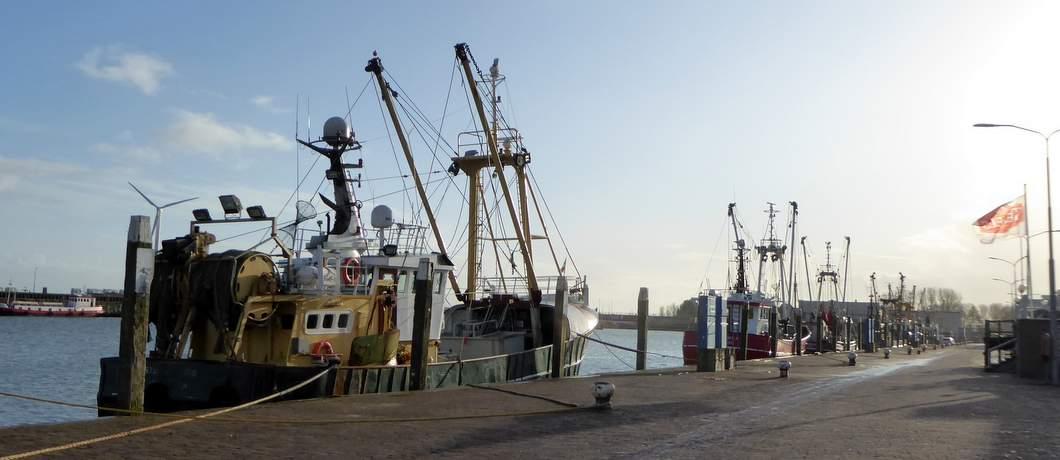 vissersvloot-zeeverse-vismarkt-wieringen-davides