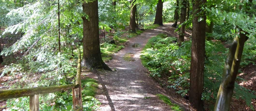 wandelen-landgoed-oud-groevenbeek-ermelo-davides